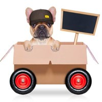 How To Choose The Best Pet Shipping Companies of 2020